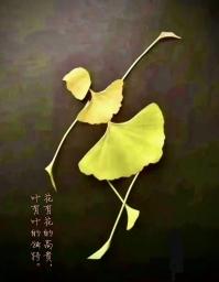 zhang520xmc